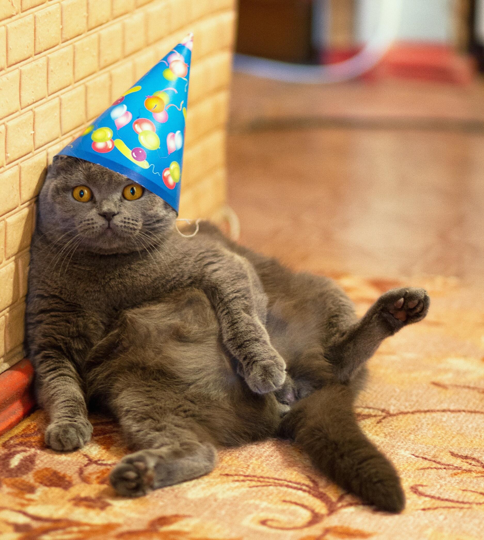 Fat Cat Wearing A Hat