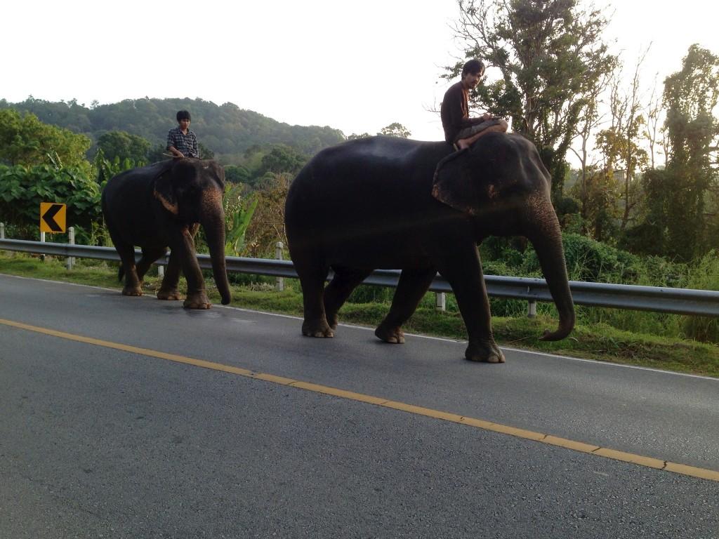 Omar Velazquez - commute  on elephants