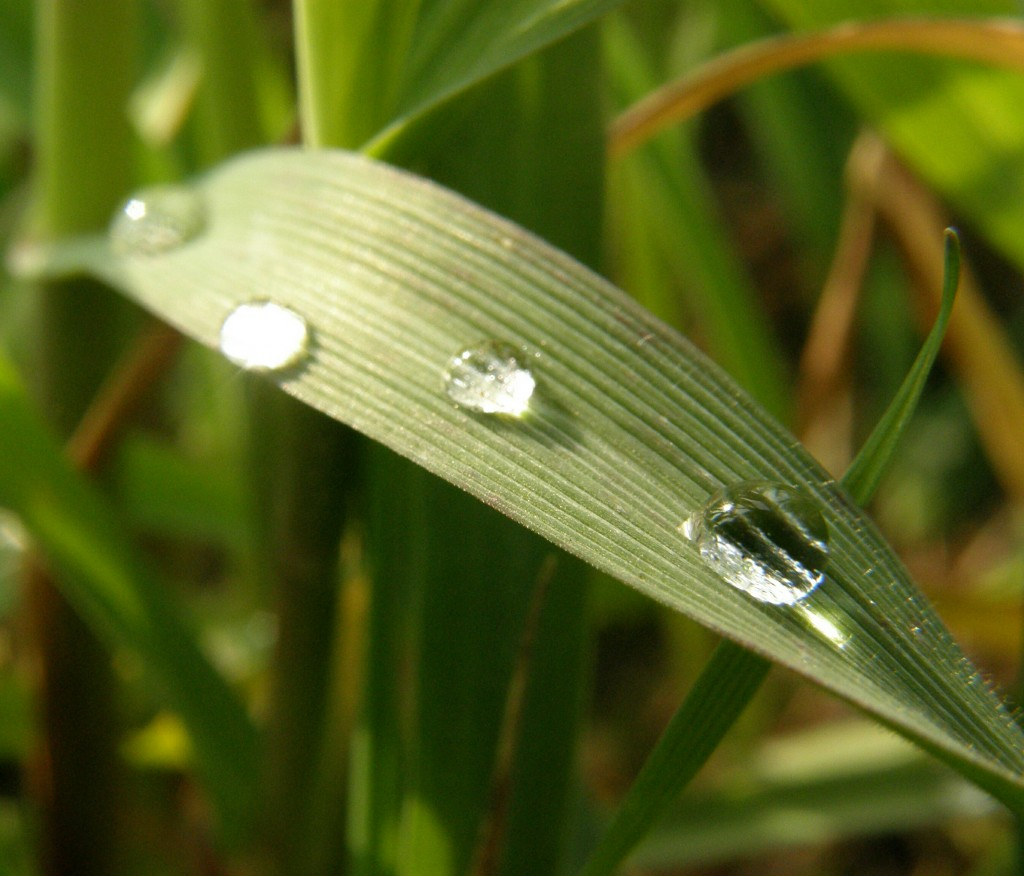 Joachim waterdrops nature scoopshot photo