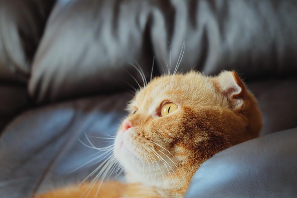 Prae Pornapat Scoopshot cat photo