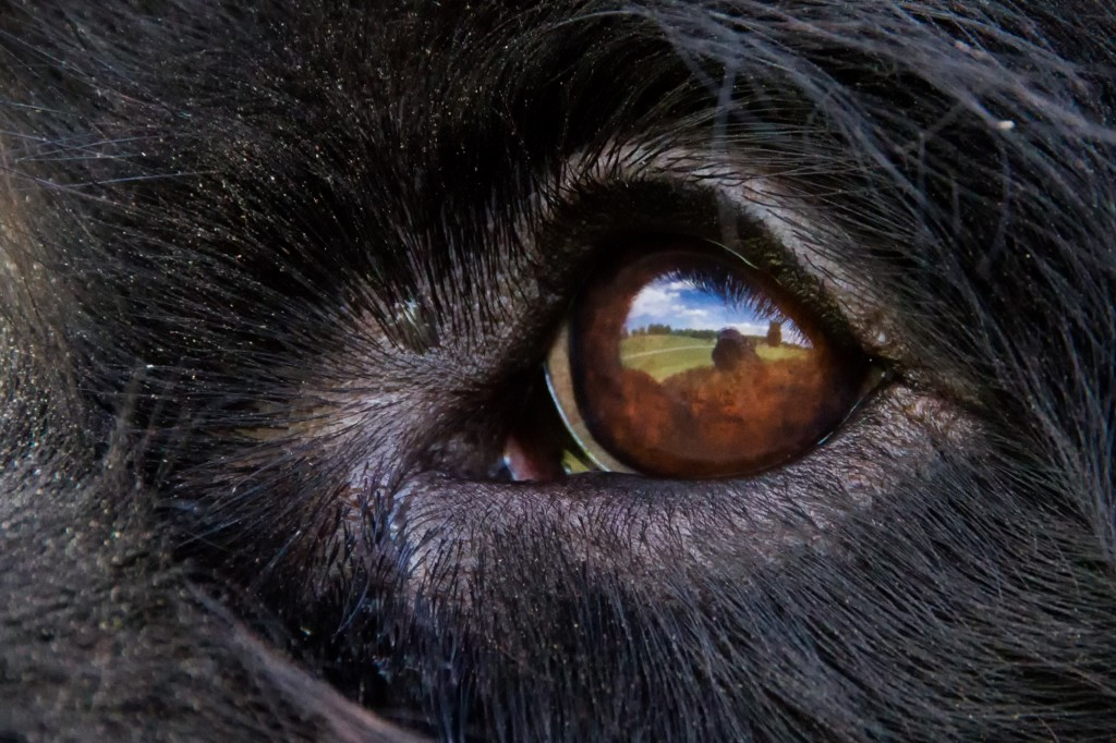 nature dog eye photo by Wungenz scoopshot